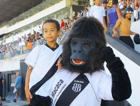 gorila-ponte-preta